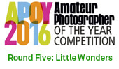APOY2016 Round Five: Little wonders, Results