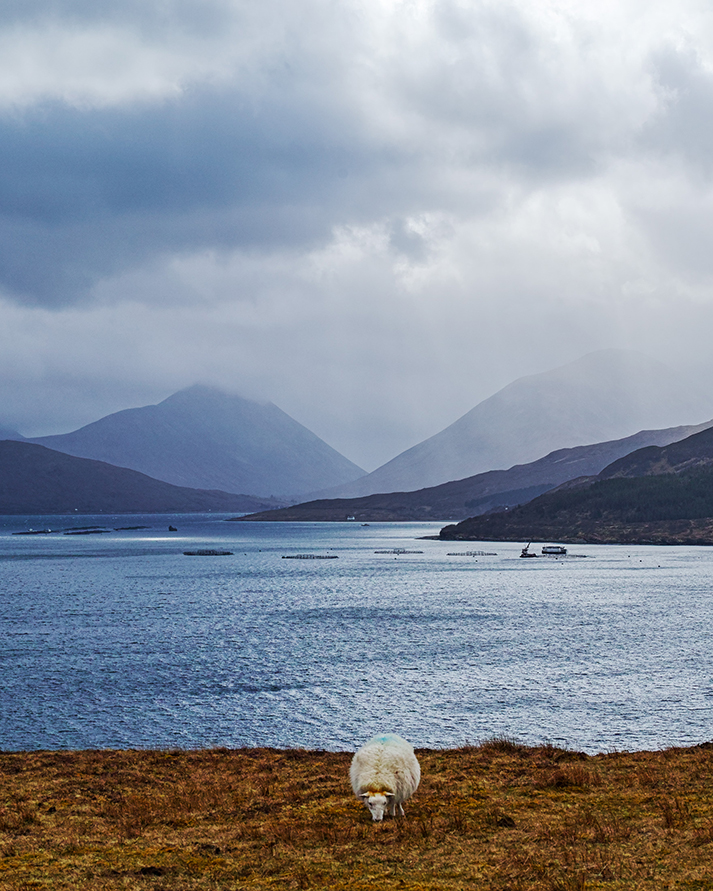 KHoltby_Raasay