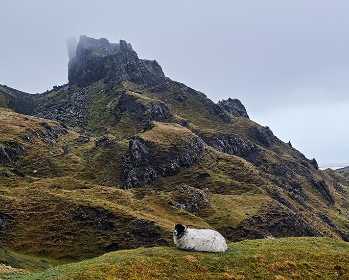 KHoltby_Trotternish Sheep