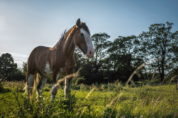 Clydesdale horse - SIGMA 45mm F2.8 DG DN | Contemporary with Panasonic S1