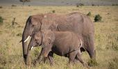 The SIGMA 150-600mm F5-6.3 DG OS HSM   Contemporary lens is the perfect lens choice for a Maasai Mara Safari by photographer Adam N. Smith