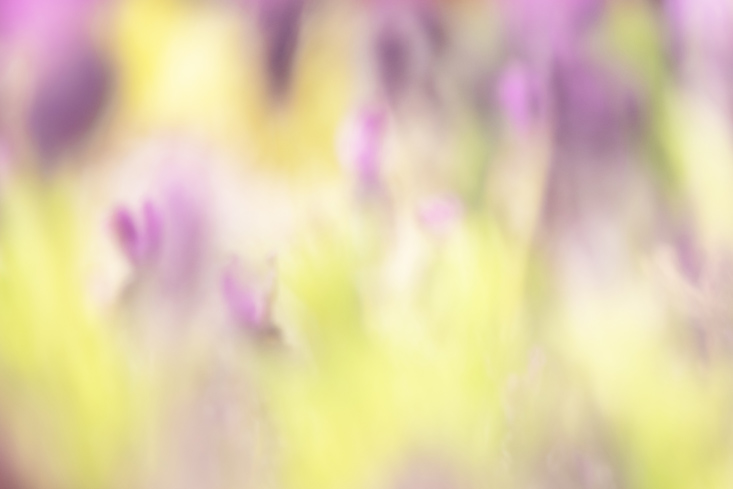 Phil Starkey is a Dartmoor, Devon and Cornwall landscape photographer specialising in traditional style landscape images and intentional camera movement abstracts. She's exhibited nationally, is a Kase UK Pro Partner and a Vanguard UK Ambassador.