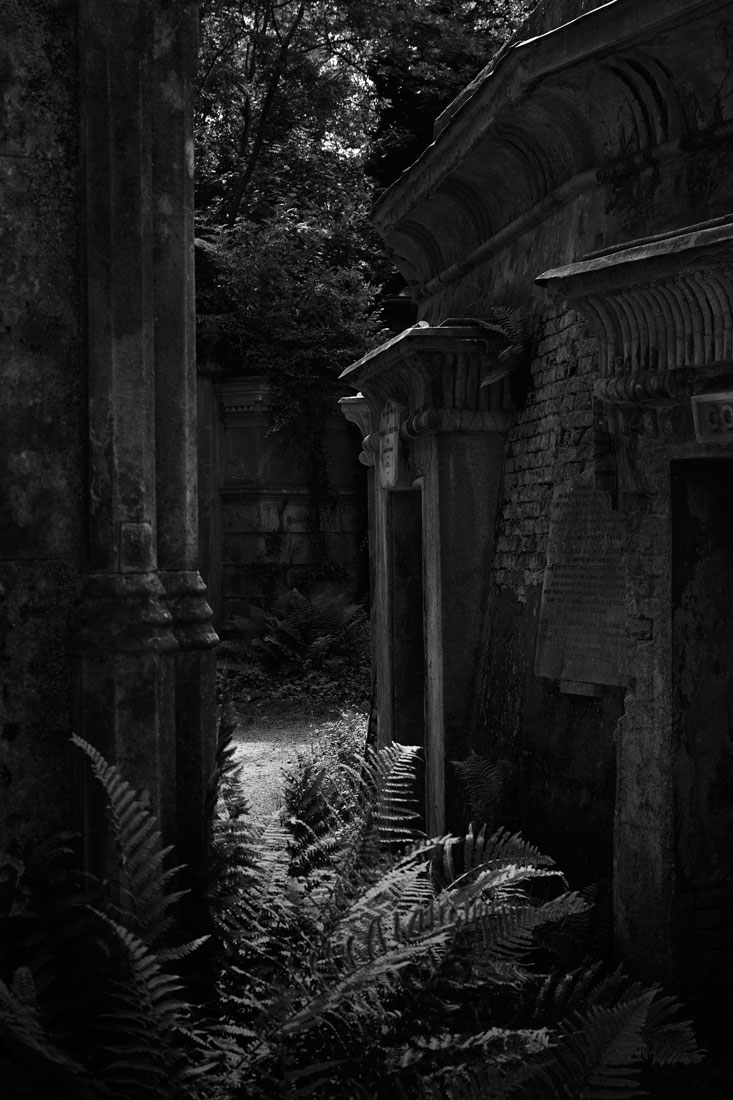 Inner-circle-fern_-Highgate-Cemetery