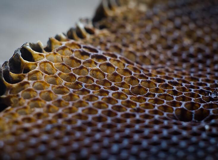 Honeycomb (4)