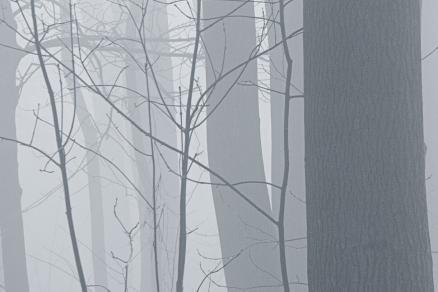 mist crop