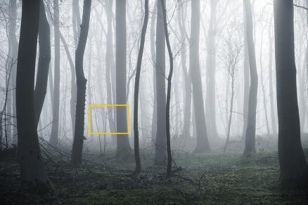 mist web2